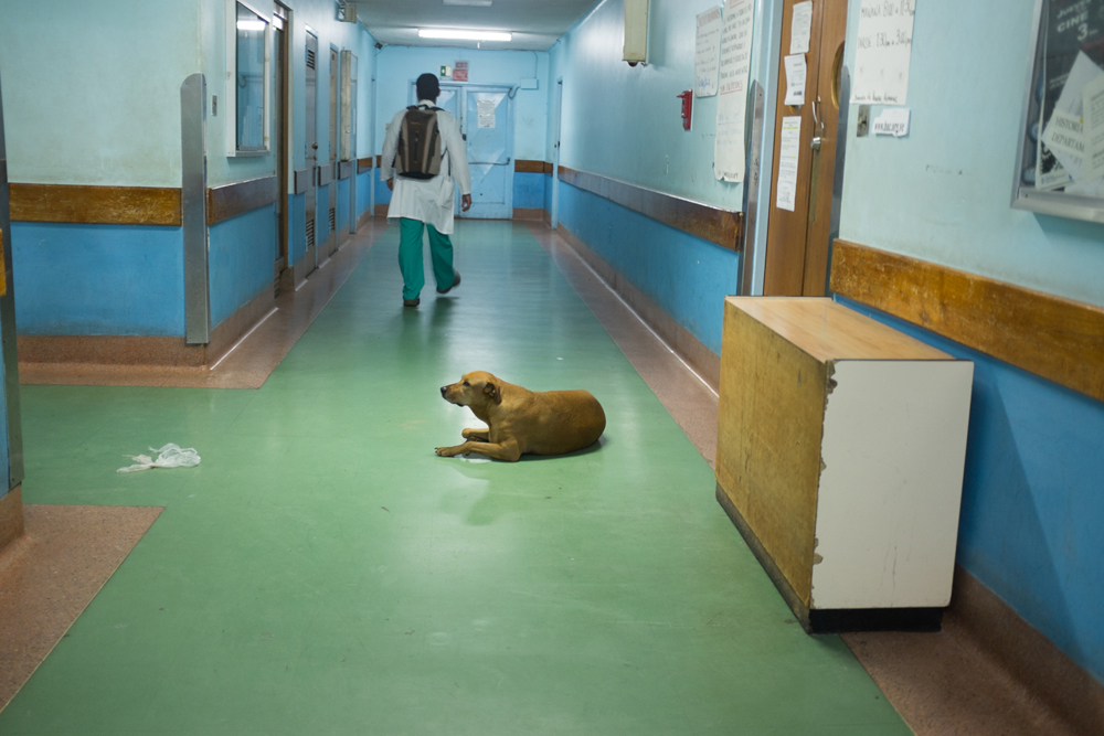 From the series X-Ray. Sometimes, the only guardians in public hospitals are stray dogs. Because of this lack of security, doctors have often been robbed during both day and night shifts. ©Betty Zapata