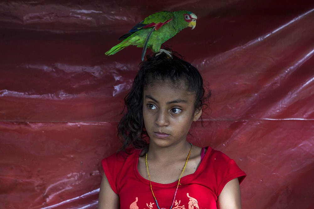 Jose Maria Morelos, Oaxaca, Mexico, August 23rd, 2014: ose Maria Morelos, Oaxaca, August 22nd,2014: Aracely Montserrat, 12, with the parrot Teresa during a visit to her aunt's house in Jose Maria Morelos. For years Mexico's black communities have lived isolated and often forgotten, but still practicing some of the traditions of their African descendants, largely slaves and escaped slaves who fled into remote hills in southern Mexico. But a new effort is underway to officially count the population in the next national census in February, what advocates call a key step in bringing recognition to the communities and making the country more aware of people from what is commonly called